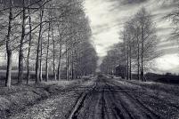 A-Landscapes-115