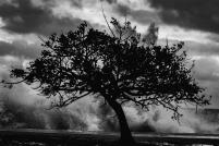 A-Landscapes-118