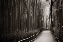 A-Landscapes-123