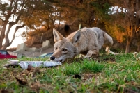 Photo by Urban Coyote Initiative